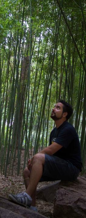 Bambú H DSC02510